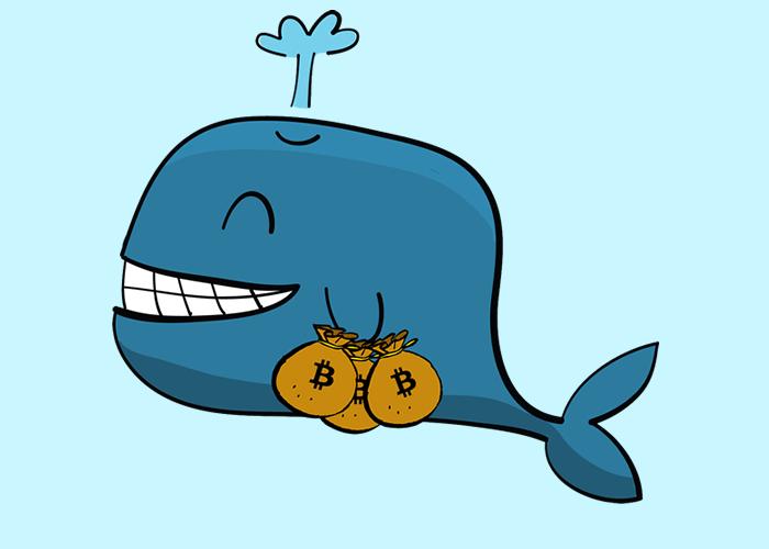 cripto whale